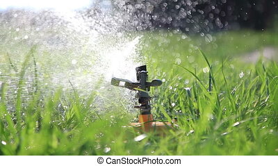 Watering the lawn grass.