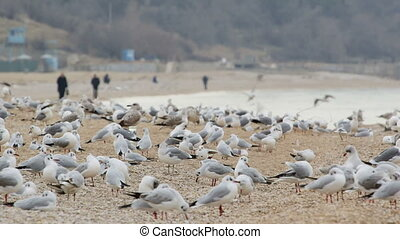 Flock of seagulls on empty beach - Flock of seagulls on the...