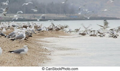 Birds fly up from the seaside - Flock of seagulls fly up...