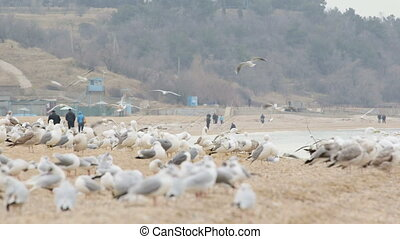Beach during the offseason - Flock of seagulls and a few...