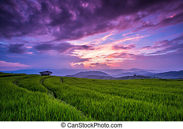 Paddy Green sunset view Beautiful Chiang Mai Northern...