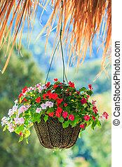 Petunias in hanging pots Petunia hybrida Vilm