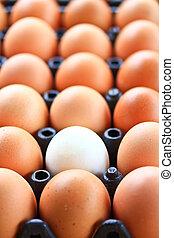 egg in carton box