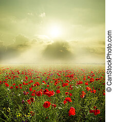 landscape - Poppy flower in the sky