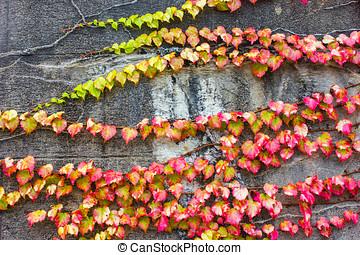離開, 葡萄樹, 紅色