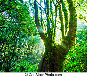 Green forest sunlight. Nature big trees