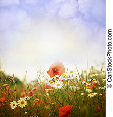 Flower field - Beautiful spring background with flowers