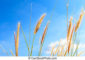 steppe grass against blue sky