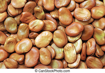 fava bean for background uses