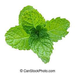 spearmint isolated white background