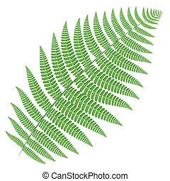 tree fern - Twig of tree fern isolated on white background