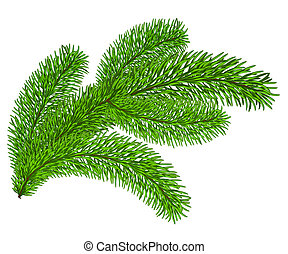 Twig of evergreen