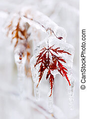 Icy winter leaf - Tree leaf covered in ice and icicles...