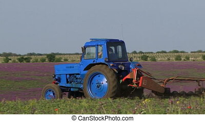 Lavender field - Tractor in a field of lavender