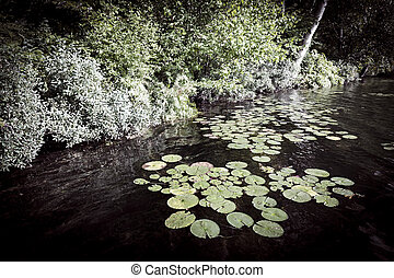 Lily pads at lake shore - Lily pads floating on dark water...