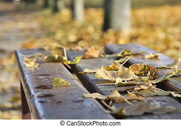 nostalgia - dead leaves on a bench in a park