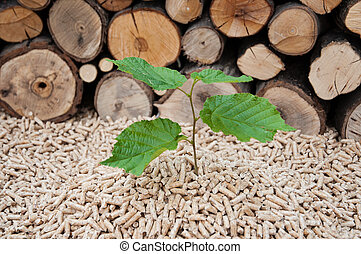 Pellets- Biomass - Young tree comes out of heap of pellets