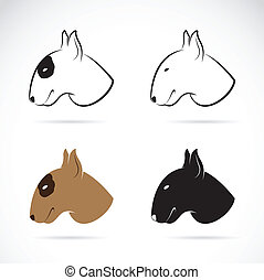 Vector image of bull terrier on white background