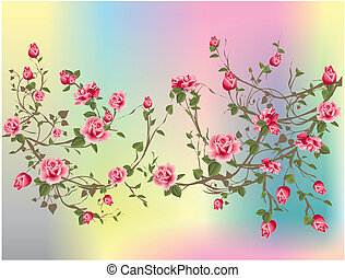 Shrub rose, - composition of spring shrub rose on a colored...
