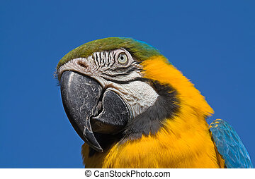 tropical macaw parrot - portrait of a macaw parrot