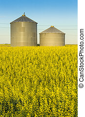 Grain Bins in a Canola Field - A pair of steel grain bins...