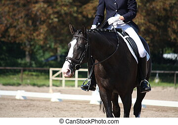 Black horse portrait during dressage competition - Black...