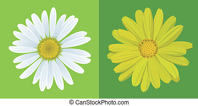 chamomile and marigold on green background