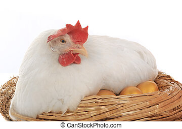 hen a nest with gold eggs