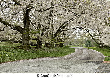 Flowering Trees - A row of flowering trees