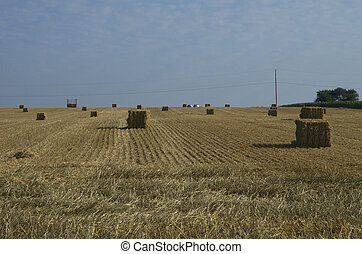 Straw Bales - Straw bales in a field