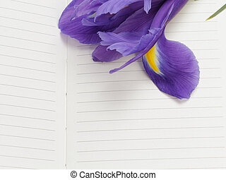 iris with blank paper note, with space for text