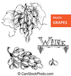 Grapes Set of illustration - Hand drawn illustration of...