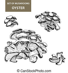 Mushrooms. Oyster. - Set of mushrooms. Oyster mushrooms.