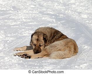 Dog sleeping on ski slope