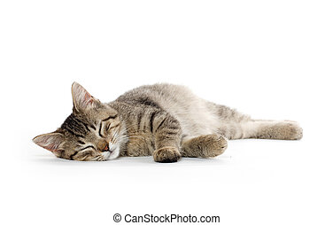 Cute tabby kitten - Cute baby tabby kitten laying down on...