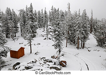 Shed in a snow-covered forest, South Lake Tahoe, California
