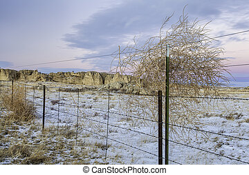 cattle fence and tumbleweed - calm winter dusk over prairie...