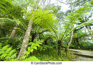 fern leaves in a park