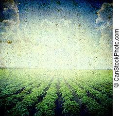 landscape - Potato field under blue sky