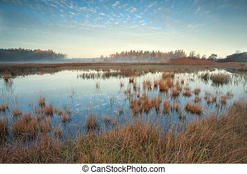 gold sunshine over swamp in autumn, Friesland, Netherlands