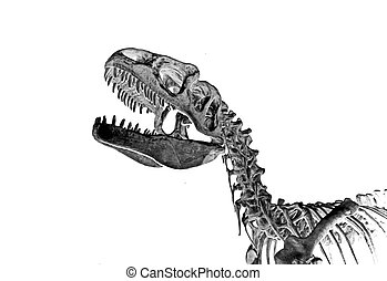 Tyrannosaur 2 - The assembled fossilized remains of a...