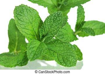 spearmint - a branch of spearmint on isolated white...