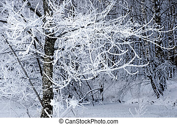 Tree with rime frost on cold Scandinavian winter day