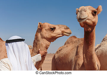Arab with a camel in the desert