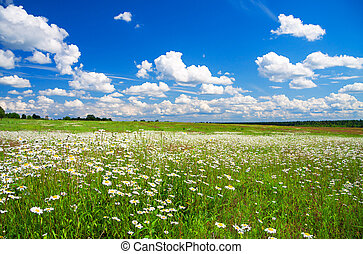 summer rural landscape with the blue sky - beautiful summer...