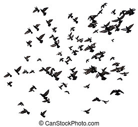 Many birds flying in the sky - Silhouettes of pigeons Many...