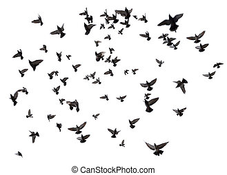 Many birds flying in the sky - Silhouettes of pigeons. Many...