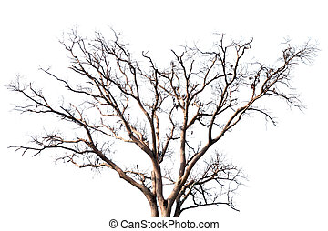 Dead tree. - Dead tree on the white background.