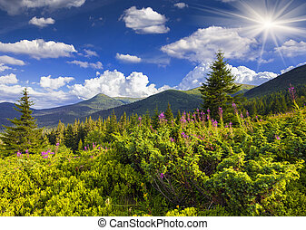 Beautiful summer landscape in the mountains with pink flowers