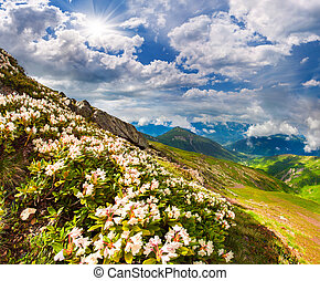 Alpine meadows in the Caucasus mountains. Upper Svaneti,...